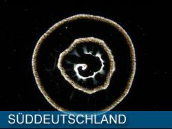 Wasser aus Süddeutschland